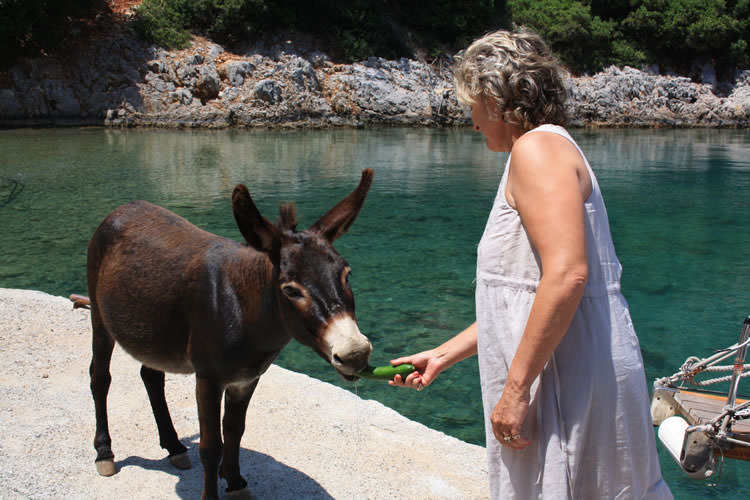 turkish-villa-donkey_mini